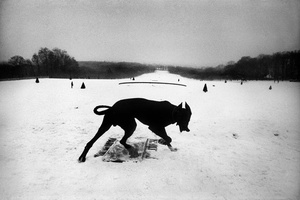 Josef Koudelka: Animals (SIGNED, Limited Edition Portfolio of 18 Héliogravures)