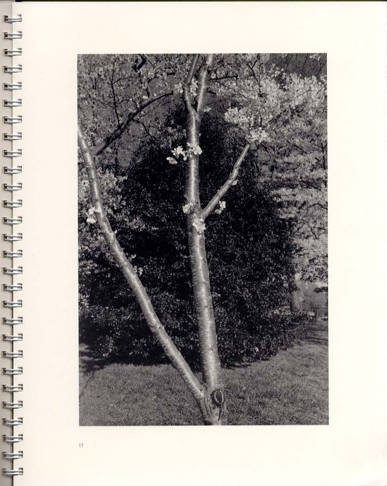 Lee Friedlander: Flowers and Trees (SIGNED)