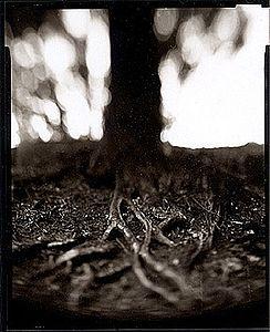 Tree Veins II © Derek Mohr