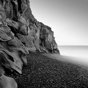 Image © Michael Levin