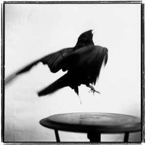 © Keith Carter, 2003, All Rights Reserved.