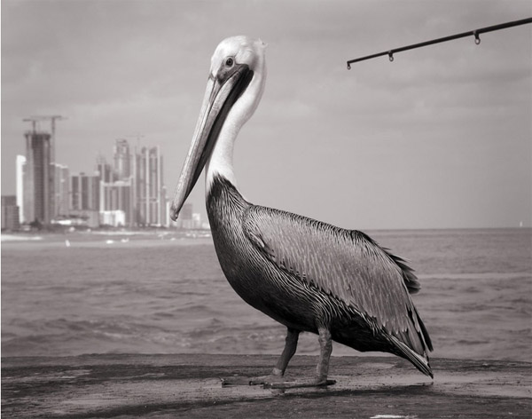 © Mark Surloff