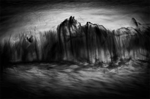 © Svjetlana Tepavcevic