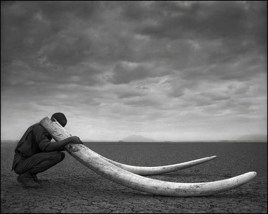 Tusks of Killed Elephant © Nick Brandt