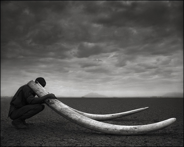 Ranger with Tusks of Killed Elephant, Amboseli 2011