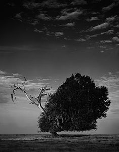 Image © Holger Eckstein