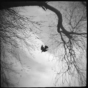 Image © Krista Elrick