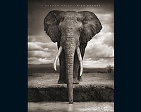 Nick Brandt: A Shadow Falls