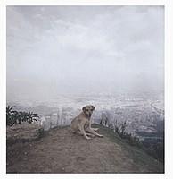 Alec Soth: Dog Days Bogota