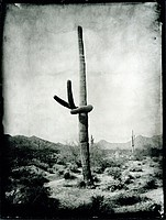 Mark Klett: Saguaros - Signed, Limited, and  Deluxe Edition