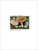 Jason Fulford: The Mushroom Collector