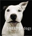 Traer Scott: <em>Shelter Dogs</em>