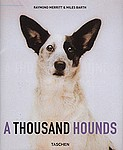 Dogs                                              : A Thousand Hounds