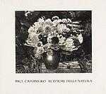 PAUL CAPONIGRO: Le Forme Della Natura.