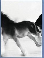 Yuji Obata: Wintertale