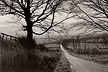 George Tice: Stone Walls-Grey Skies. A Vision of Yorkshire.